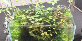 swamp - Flowgrow Aquascape/Aquarien-Datenbank