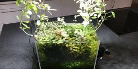 swamp - Flowgrow Aquascape/Aquarien-Datenbank