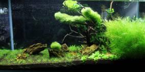 The Beginning - Flowgrow Aquascape/Aquarien-Datenbank