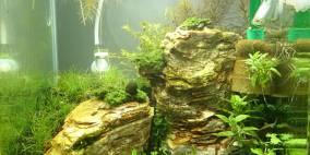 The Cliff - Flowgrow Aquascape/Aquarien-Datenbank