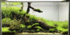 The Dead Men - Flowgrow Aquascape/Aquarien-Datenbank