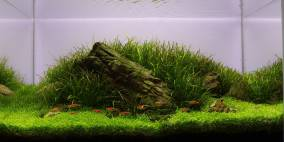 The Green Balance - Flowgrow Aquascape/Aquarien-Datenbank