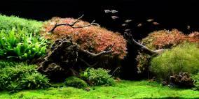 The Green Beach  - Flowgrow Aquascape/Aquarien-Datenbank