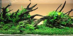 The Longest Time - Flowgrow Aquascape/Aquarien-Datenbank