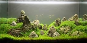 """The """"Rocks"""" - Flowgrow Aquascape/Aquarien-Datenbank"""