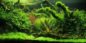 The slender way - Flowgrow Aquascape/Aquarien-Datenbank