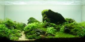 Time passes by - Flowgrow Aquascape/Aquarien-Datenbank