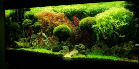 To break new Ground - Flowgrow Aquascape/Aquarien-Datenbank