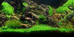 Tobi´s Flussufer Panorama - Flowgrow Aquascape/Aquarien-Datenbank