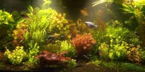 Traum in Weiss - Flowgrow Aquascape/Aquarien-Datenbank