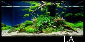 Tree of Life - Flowgrow Aquascape/Aquarien-Datenbank