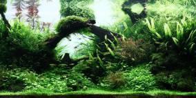 Treibholz & Pflanzen - Flowgrow Aquascape/Aquarien-Datenbank