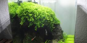 Tulamben Cave - Flowgrow Aquascape/Aquarien-Datenbank