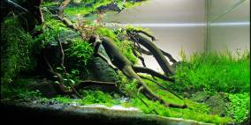 Under a tree - Flowgrow Aquascape/Aquarien-Datenbank