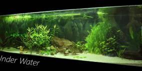 Under Water - Flowgrow Aquascape/Aquarien-Datenbank