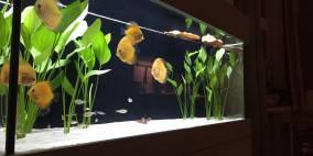 Unser erstes Aquarium - Flowgrow Aquascape/Aquarien-Datenbank