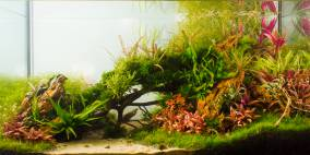 Unter Eichen - Flowgrow Aquascape/Aquarien-Datenbank