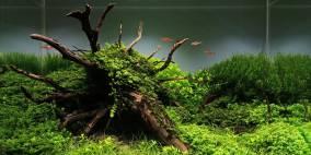 Uprooted - Flowgrow Aquascape/Aquarien-Datenbank