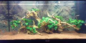 uwegger - Flowgrow Aquascape/Aquarien-Datenbank