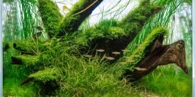 Vailanti - Flowgrow Aquascape/Aquarien-Datenbank