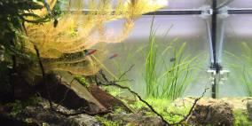 Wabi Sabi, Rotz und Wasser - Flowgrow Aquascape/Aquarien-Datenbank