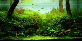 Was müssen das für Bäume sein... - Flowgrow Aquascape/Aquarien-Datenbank