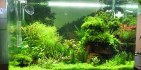 Wasgau-Tal - Flowgrow Aquascape/Aquarien-Datenbank