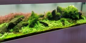 Wasserglas 3 - Flowgrow Aquascape/Aquarien-Datenbank
