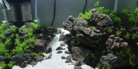 Welcome to Paradise - Flowgrow Aquascape/Aquarien-Datenbank