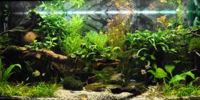 welcome to the Jungle - Flowgrow Aquascape/Aquarien-Datenbank