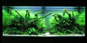 Wood Glade - Flowgrow Aquascape/Aquarien-Datenbank