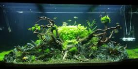 Wood in Rocks - Flowgrow Aquascape/Aquarien-Datenbank