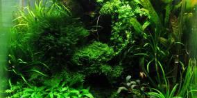 Wurzelwerk - Flowgrow Aquascape/Aquarien-Datenbank