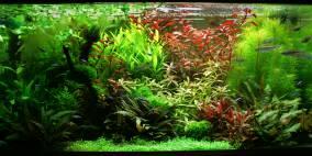 Zewana`s kleiner Wasserpark - Flowgrow Aquascape/Aquarien-Datenbank