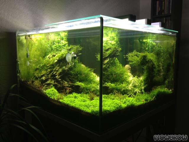 100l cube flowgrow aquascape aquarium database. Black Bedroom Furniture Sets. Home Design Ideas