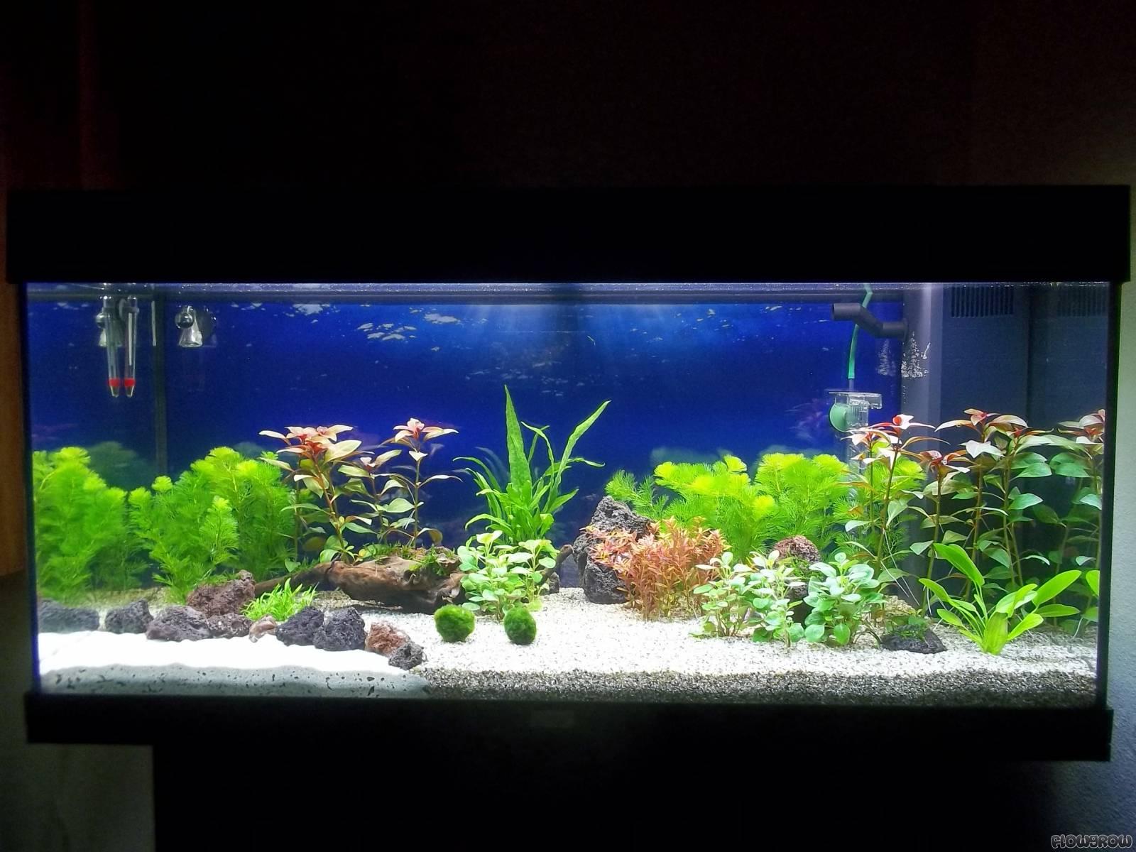 Fische & Aquarien Aquarium 180 Liter Aquarien