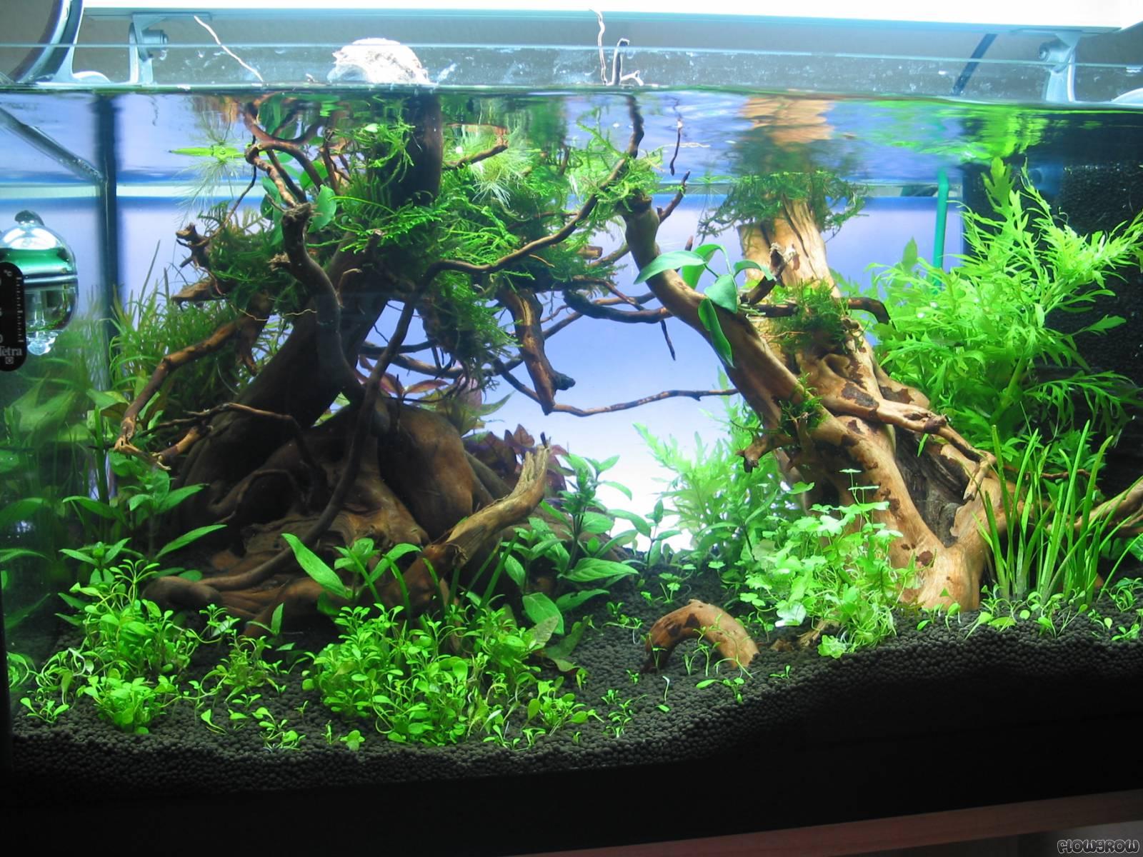 60l Flowgrow Aquascape Aquarium Database