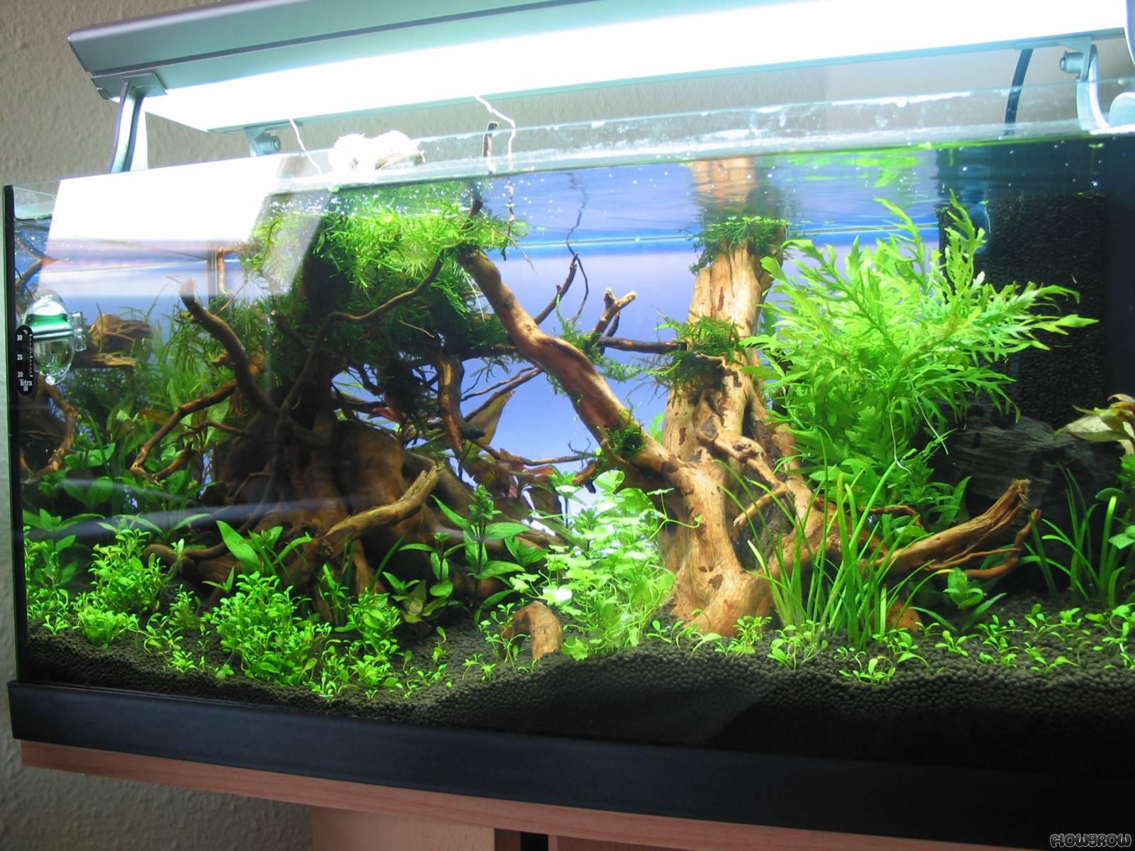 60l - Flowgrow Aquascape/Aquarium Database