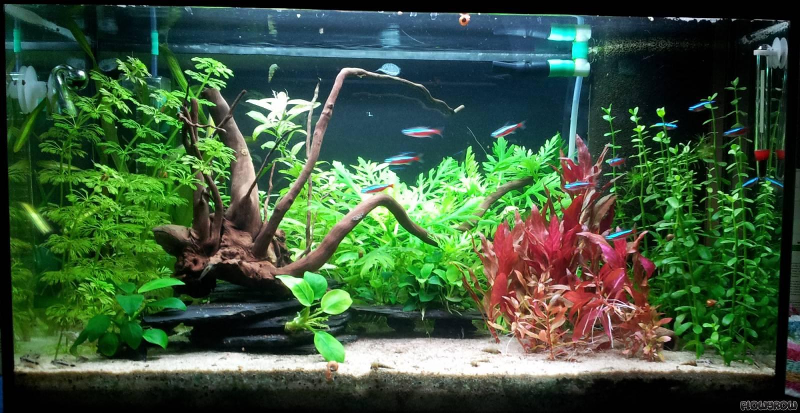 63l kinderzimmer flowgrow aquascape aquarium database for Aquarium im kinderzimmer
