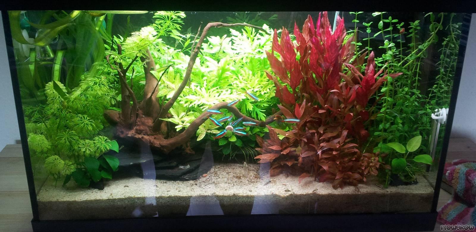 63l Kinderzimmer - Flowgrow Aquascape/Aquarium Database