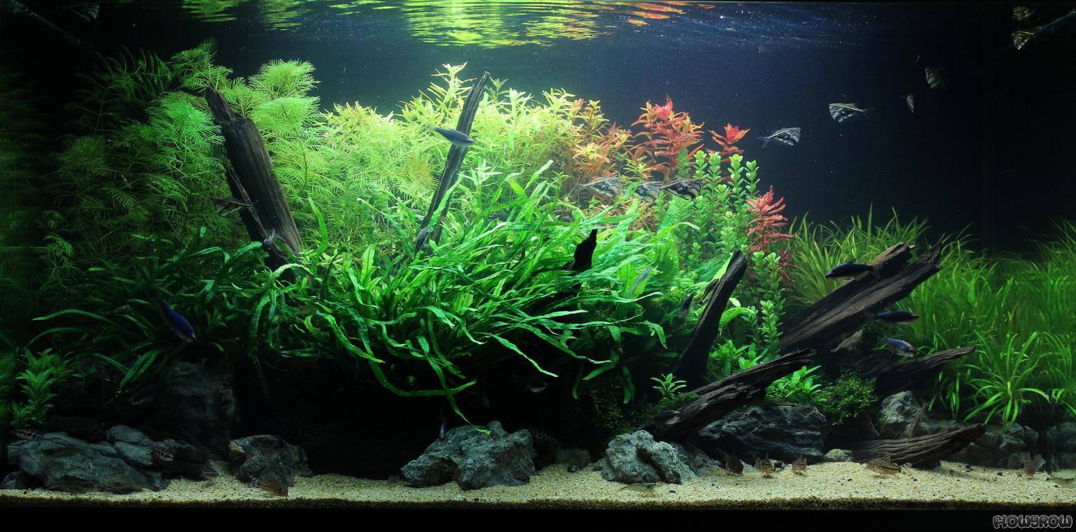 amazon phantasy flowgrow aquascape aquarium database. Black Bedroom Furniture Sets. Home Design Ideas