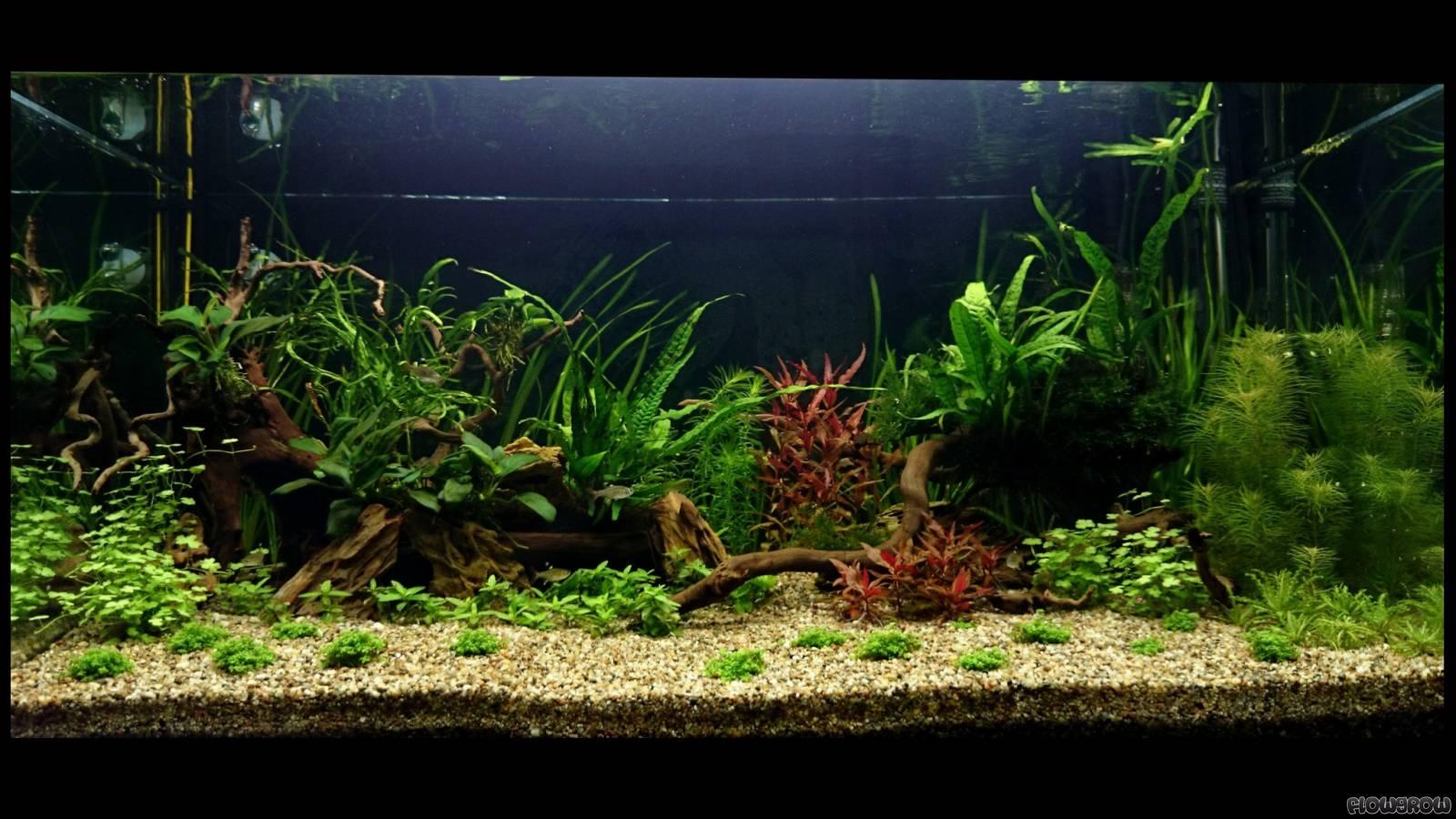 bacia do rio amazonas flowgrow aquascape aquarium database. Black Bedroom Furniture Sets. Home Design Ideas