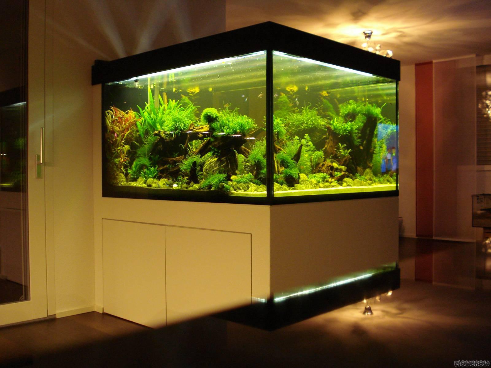 bathtube flowgrow aquascape aquarium database. Black Bedroom Furniture Sets. Home Design Ideas