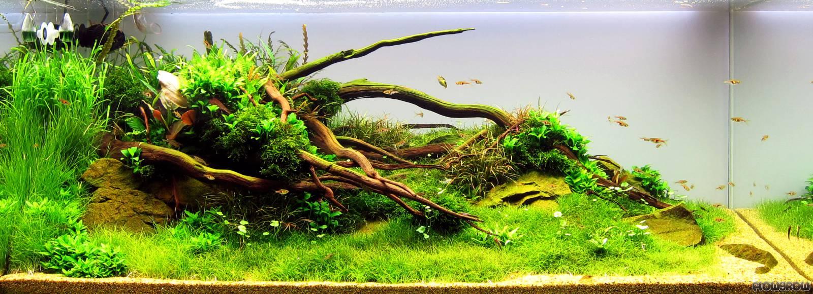 Below - Flowgrow Aquascape/Aquarium Database