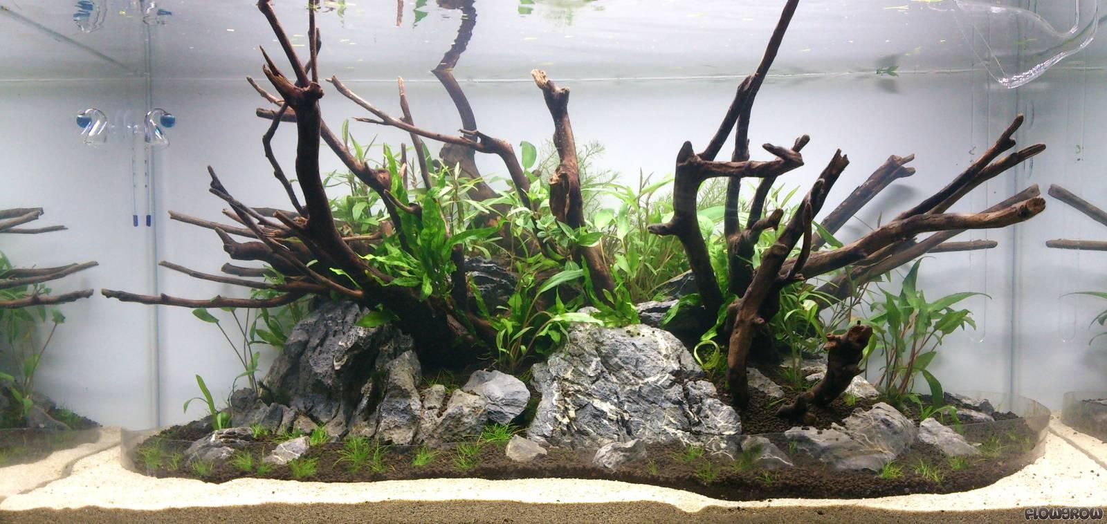 Bubble Island Flowgrow Aquascape Aquarium Database