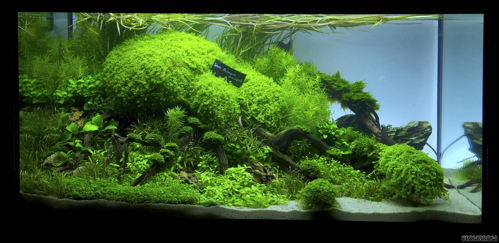Closer - Flowgrow Aquascape/Aquarium Database