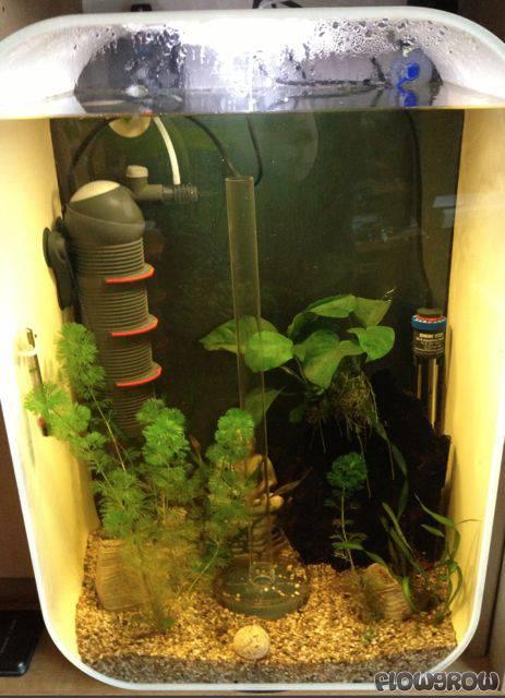 endoskuebl flowgrow aquascape aquarium database. Black Bedroom Furniture Sets. Home Design Ideas