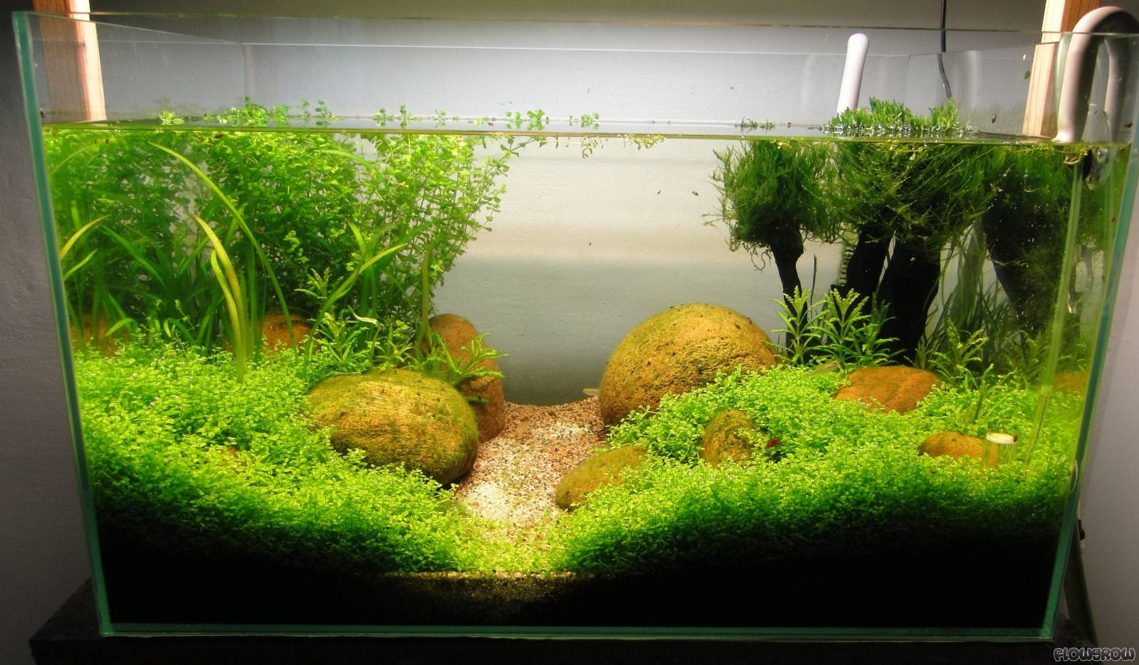 erstes aquascape flowgrow aquascape aquarium database. Black Bedroom Furniture Sets. Home Design Ideas
