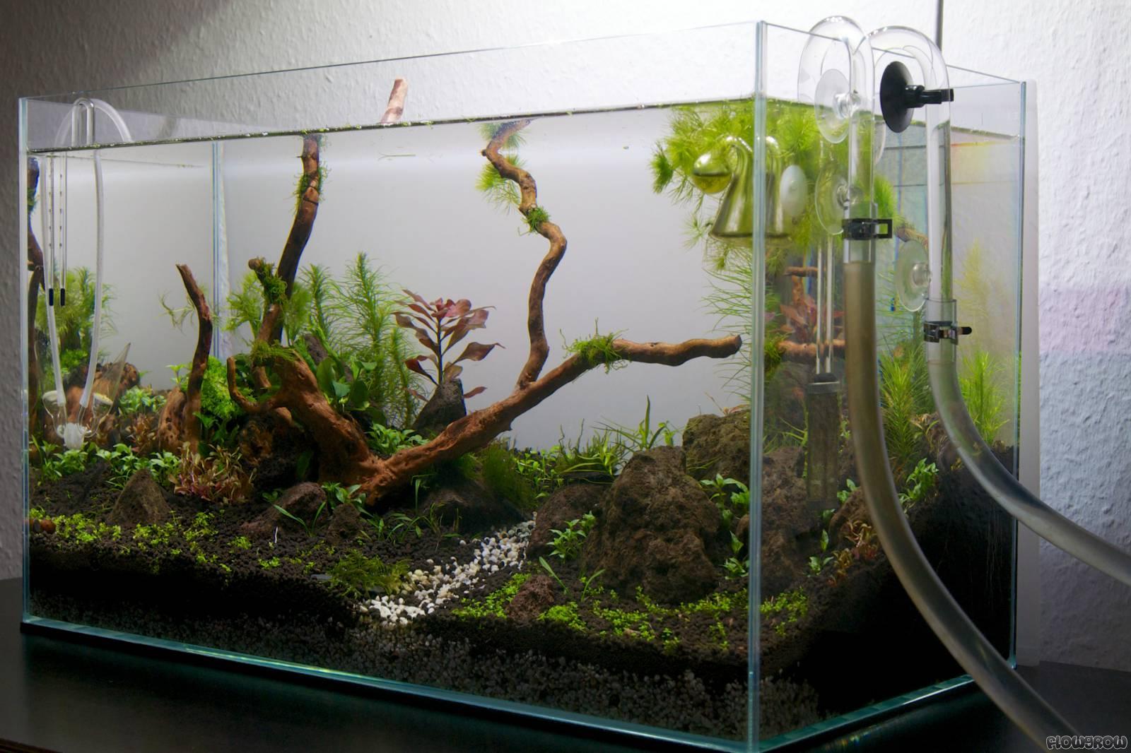 green ii flowgrow aquascape aquarium database. Black Bedroom Furniture Sets. Home Design Ideas