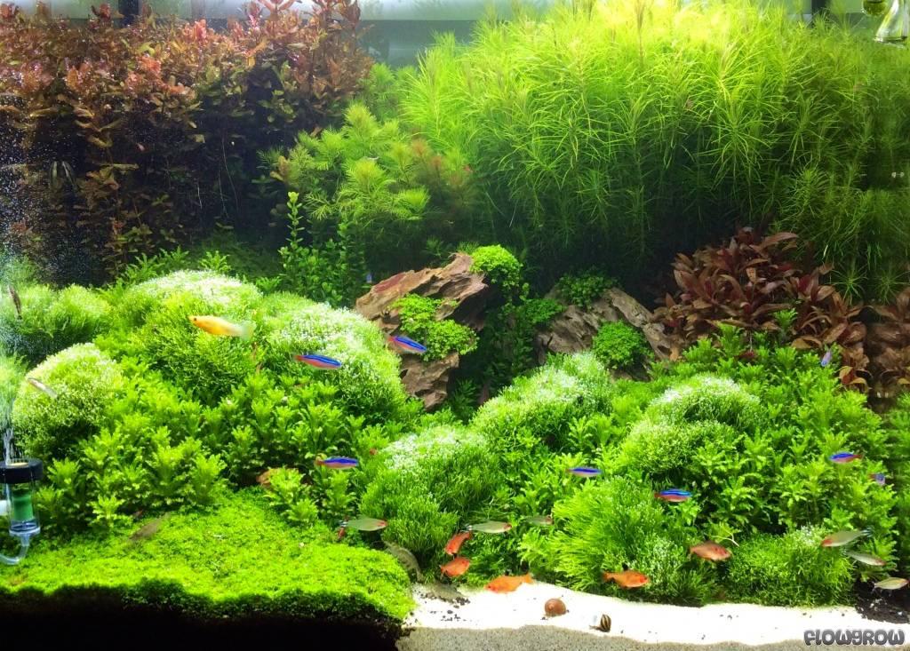 Greengarden - Flowgrow Aquascape/Aquarium Database